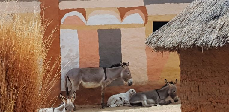 All the animals were seeking shelter in the shade of the beautifully painted houses