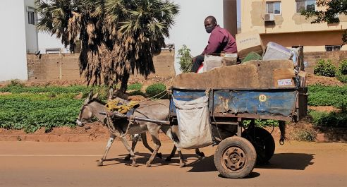 Donkey cart taking the trash outside the city.